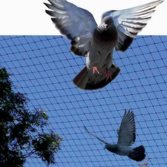 filet anti oiseaux environnement filets de protection. Black Bedroom Furniture Sets. Home Design Ideas